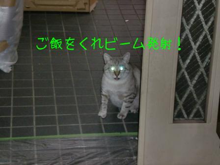 ご飯をくれ!