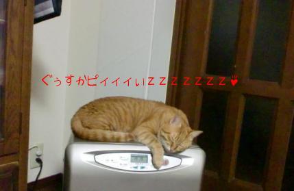 ファンヒーターで寝ています