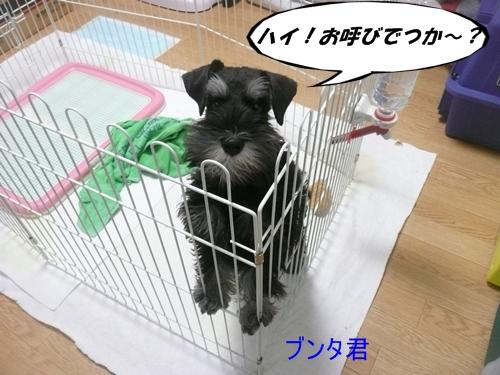 雅っ子ブンタ10月28日
