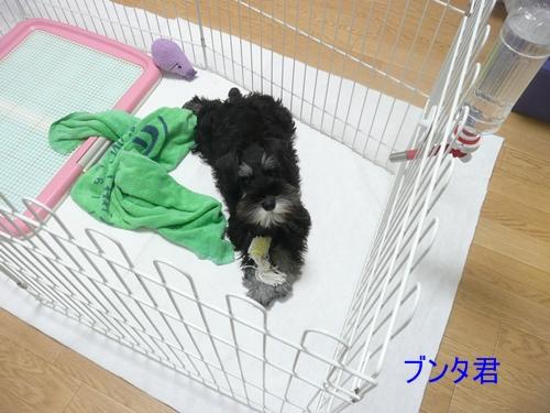 雅っ子ブンタ10月31日