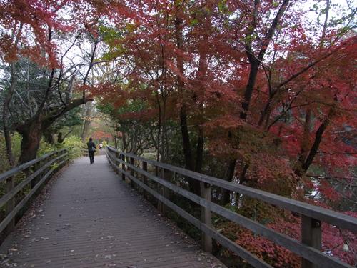 池の端の木道