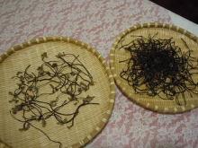 Gooseberryの植木鉢-干しゼンマイ