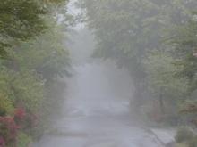 Gooseberryの植木鉢-雨上がりの霧