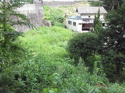 草刈りBefore