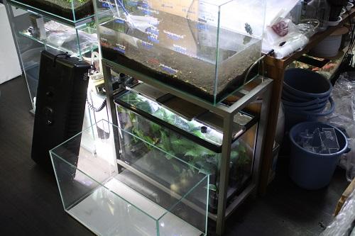 宿題の一歩目・・・ 大丈夫か? 東海 岐阜 熱帯魚 水草 観葉植物販売 Grow aquarium