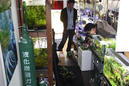 アクアライフ アグラオネマ 東海 岐阜 熱帯魚 水草 観葉植物販売 Grow aquarium