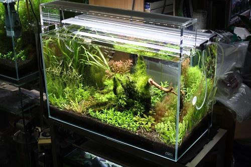水草水槽 東海 岐阜 熱帯魚 水草 観葉植物販売 Grow aquarium