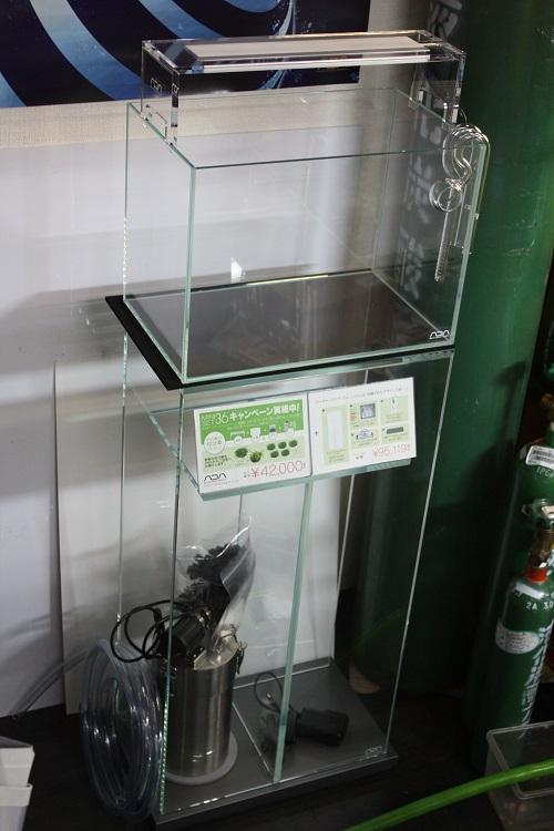 佗び草と楽しむミニセットキャンペーンのお知らせ 東海 岐阜 熱帯魚 水草 観葉植物販売 Grow aquarium