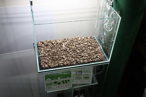 パワーサンドスペシャル 東海 岐阜 熱帯魚 水草 観葉植物販売 Grow aquarium