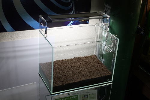 アマゾニア 東海 岐阜 熱帯魚 水草 観葉植物販売 Grow aquarium