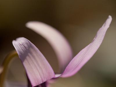 春の妖精 Ⅵ