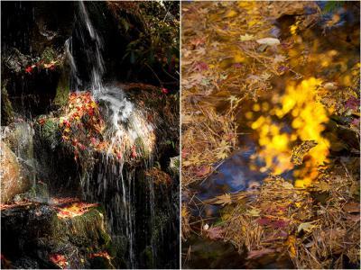 Collage002.jpg