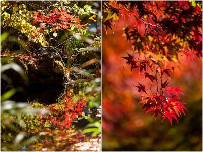 Collage005.jpg