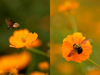 Collage_p1_800x600.jpg