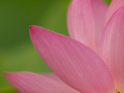 妖艶な花(8)