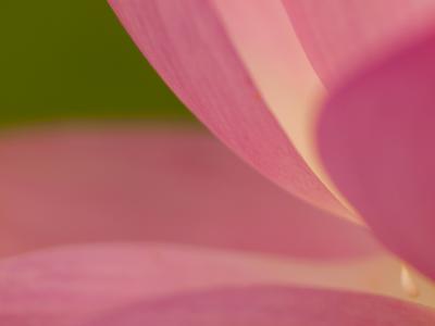 妖艶な花(1)