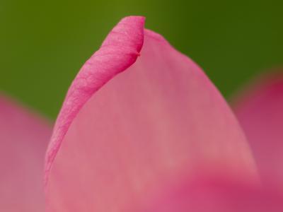 妖艶な花(3)