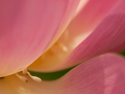 妖艶な花(4)