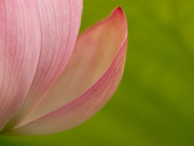 妖艶な花(7)