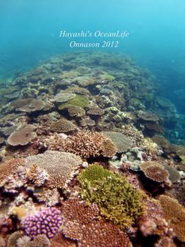 サンゴ群生a