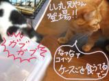 cats0076
