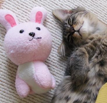 cats0109