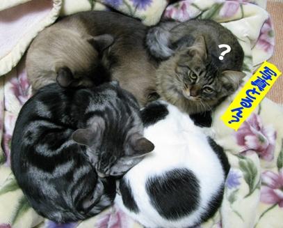 cats0124