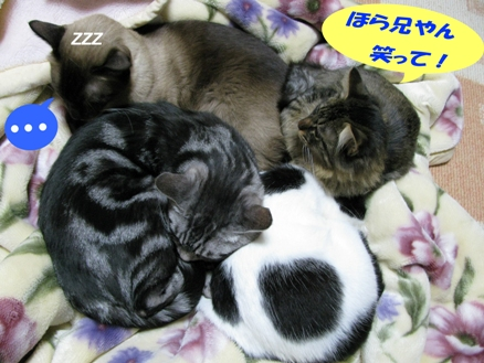 cats0127