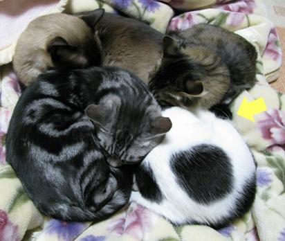 cats0128
