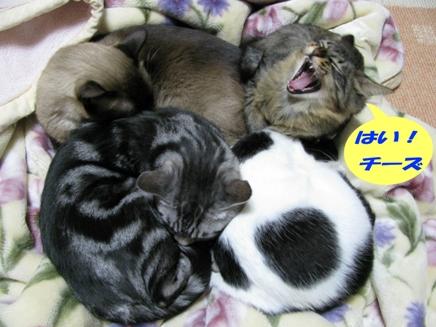 cats0123