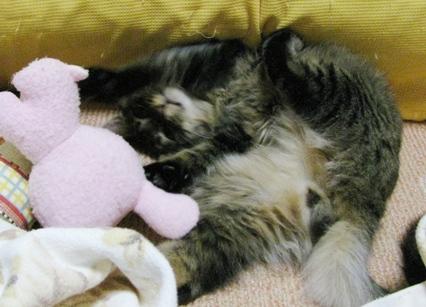 cats0118