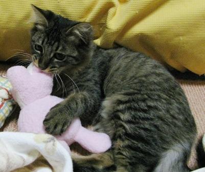 cats0119