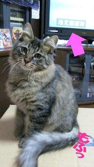 cats0132