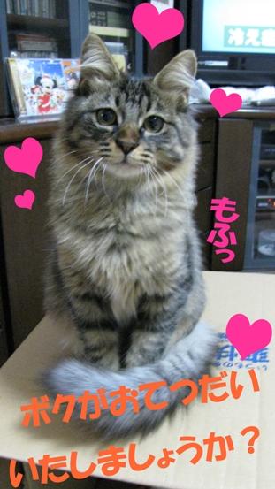 cats0131