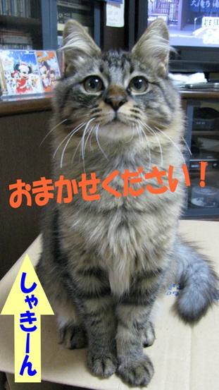 cats0130