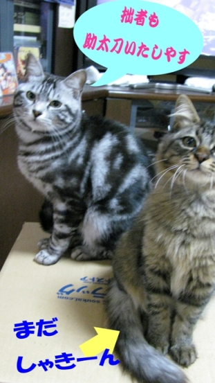 cats0129