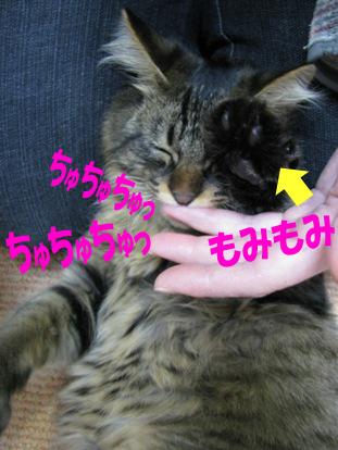 cats0134