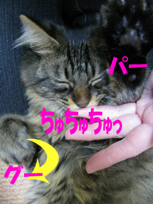 cats0139