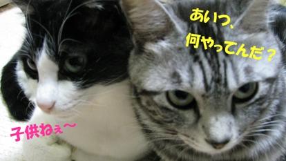 cats0140