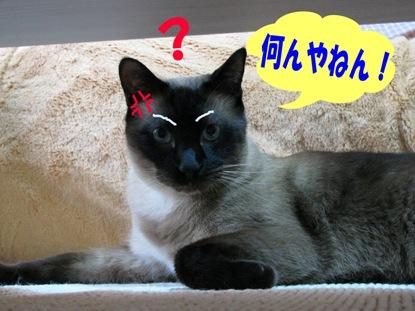 cats0069