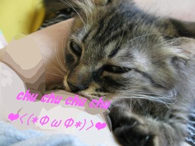 cats0064