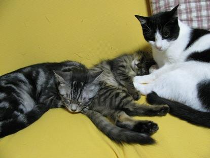 cats0071
