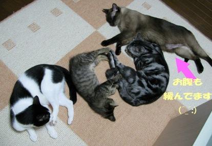 cats0083