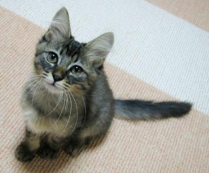 cats0080