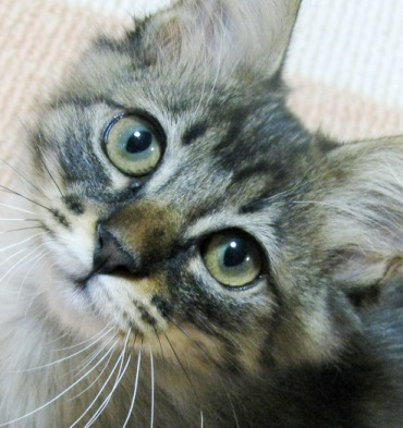 cats0084