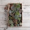 terrific-terrariums-tiny-cacti-cacti-species-white-wooden.jpeg