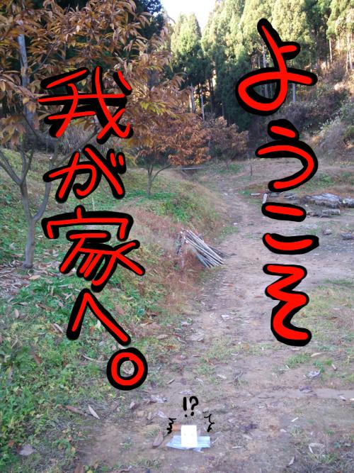 DSC_1971-1-1.png
