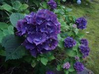 [DSC-T50] 植物
