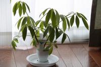 植物 日常