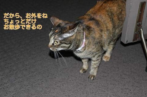 Xu7LDO4pMqYJyMb1368848654_1368848759.jpg